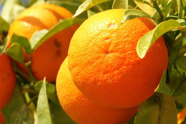 légumineuses les fruits